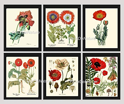 (Botanical Flower Set of 6 Art Prints Antique Beautiful Red White Papaver Opium Poppy Poppies Spring Summer Garden Home Room Wall Decor Unframed KOH)