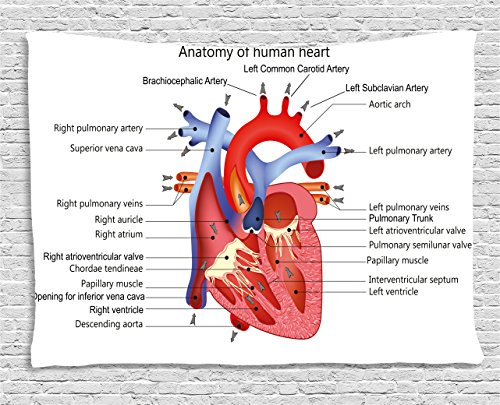 Ambesonne Educational Tapestry, Medical Structure of The Hearts Human Body Anatomy Organ Veins Cardiology, Wall Hanging for Bedroom Living Room Dorm, 60 W X 40 L Inches, Coral Red