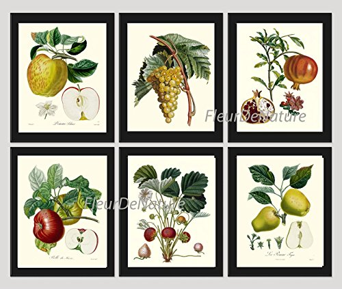 Botanical Fruit Set of 6 Prints Antique Beautiful Apple Grape Pomegranate Strawberry Pear Fruits Home Room Decor Wall Art (Gourmet Settings Frame)