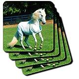 3dRose cst_101022_1 Photo of Beautiful Arabian White Horse Soft Coasters, Set of 4