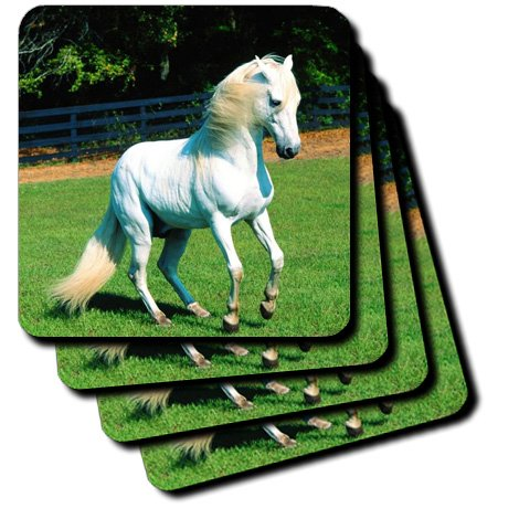 3dRose cst_101022_1 Photo of Beautiful Arabian White Horse Soft Coasters, Set of 4 by 3dRose