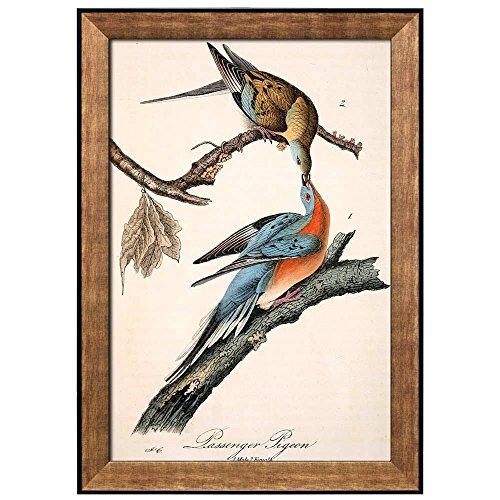 Beautiful Illustration Inside of an Elegant Frame of a Passenger Pigeon by John James Audubon Framed Art