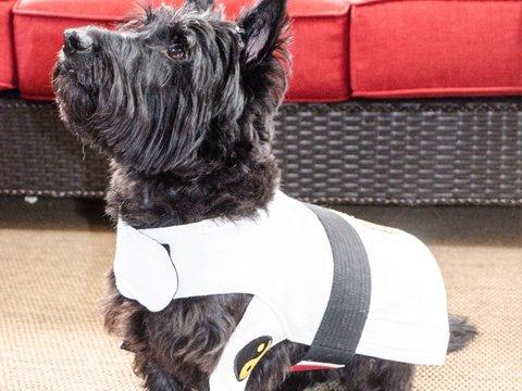 New Item DogGi Jiu Jitsu Judo Karate Martial Arts Dog Gi Kimono (MEDIUM, WHITE)