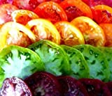 Legend Online Garden Seeds Tomato Beefsteak Rainbow DGS403050 (Multi Color) 500 Plus Organic Heirloom Seeds,