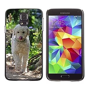 Etui Housse Coque de Protection Cover Rigide pour // M00111856 Perro Adrift Poodle híbrido Blanca // Samsung Galaxy S5 S V SV i9600 (Not Fits S5 ACTIVE)