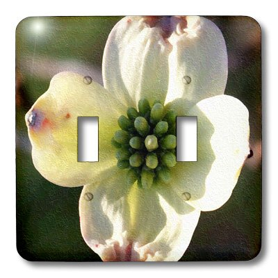 3dRose lsp_15781_2 Dogwood Bloom Oil Painting Toggle -