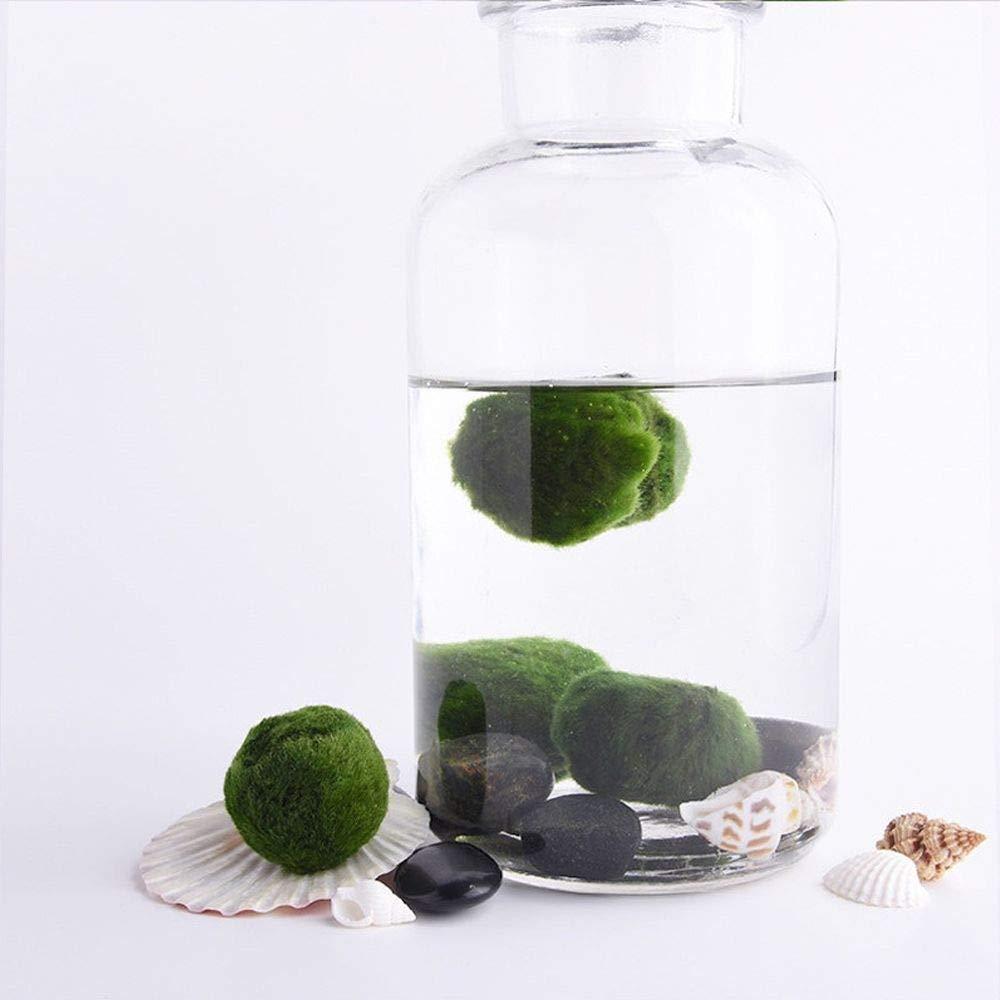 minicart 3-4cm Marimo Moss Ball Cladophora Live Plant Fish Tank Aquarium Decor Ornament