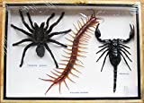 REAL GIANT SCORPION TARATULA AND CENTIPEDE INSECT TAXIDERMY COLLECTIBLES
