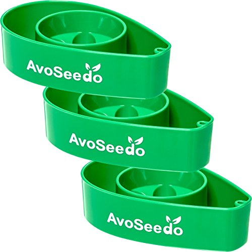 avoseedo-grow-your-own-avocado-tree-all-green