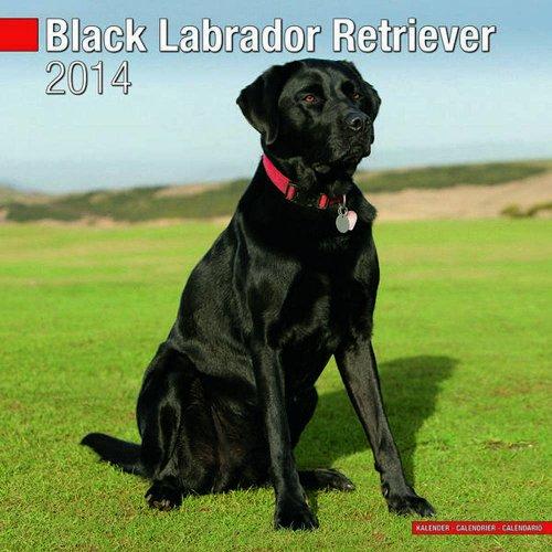 Black Labrador Retriever 2014 Wall Calendar