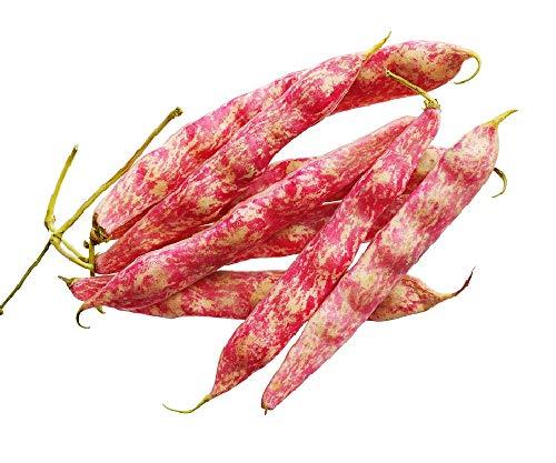 David's Garden Seeds Bean Dry Borlotto 7774 (Red) 50 Non-GMO, Heirloom ()