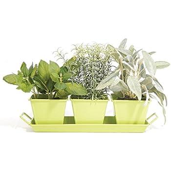 Amazon.com : Indoor Windowsill Metal Herb Garden Kit : Garden \u0026 Outdoor