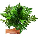 "Artificial Plants Shrubs : Z-Liant Pack of 4 Faux Plastic 14"" Bracken Leaves,Fake Simulation Greenery Garden,office,indoor decor plants,Good for Party and Festival Gift"