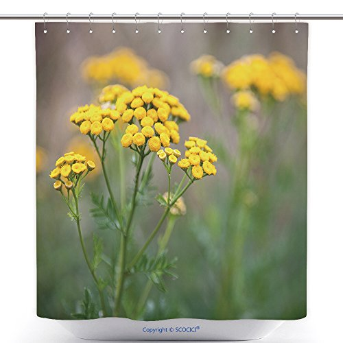 Durable Shower Curtains Yellow Tansy Flowers Tanacetum Vulgare Common Tansy Bitter Button Cow Bitter Or Golden Buttons 617301689 Polyester Bathroom Shower Curtain Set With (Common White Girl Halloween Costume Ideas)