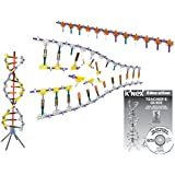 K'NEX Education - DNA, Replications and Transcription Set