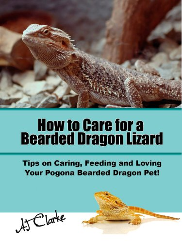 Lizard Lovin Animals (How to Care for a Bearded Dragon Lizard