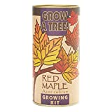 Red Maple Grow Kit