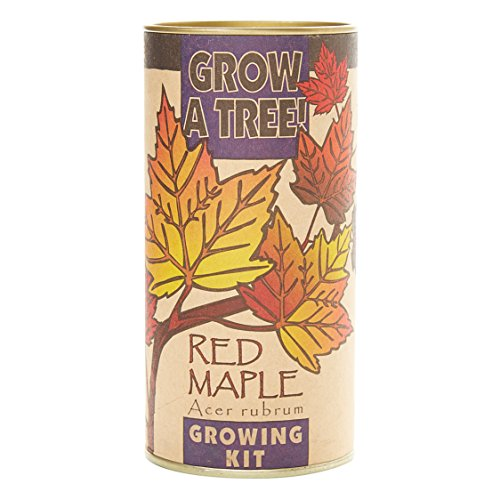 Red Maple Grow Kit (Tree Maple Red)
