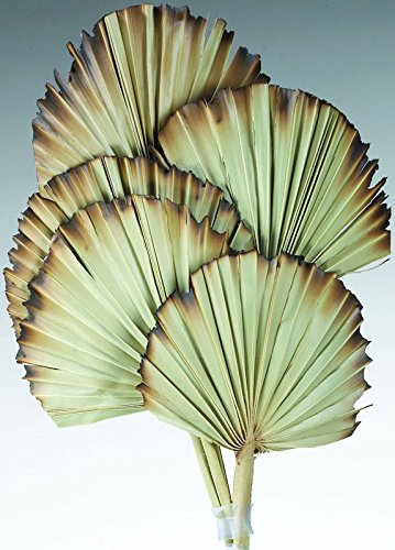Burnt Sun Palm Fans 5in. x 20in. , 5 pieces per bunch -- Single Bunch - Natural