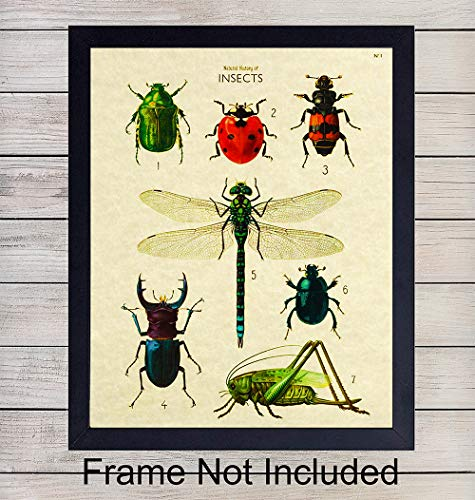 - Insects on Parchment Wall Art Print - Ready to Frame (8x10) Vintage Photo - Great Gift For Nature Lovers - Perfect for Classroom - Chic Home Decor