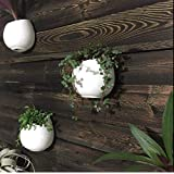 "Pack of 3 White Pots Ceramic Planters, Wall Mountable Vase, Wall Hanging Succulent Pots, Decorative Ceramic Flower Planters(4"")"
