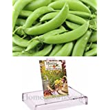 Homegrown Pea Seeds, 130 Seeds, Organic Sugar Daddy Pea