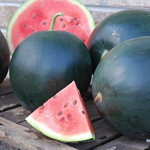 Watermelon Black Tail Mountain USDA Certified Organic Vegetable Seed - 50 seeds