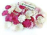 NAVA CHIANGMAI 100 Pink Color Tone mulberry Paper Daisy Flowers Scrapbooking Embellishment Handmade
