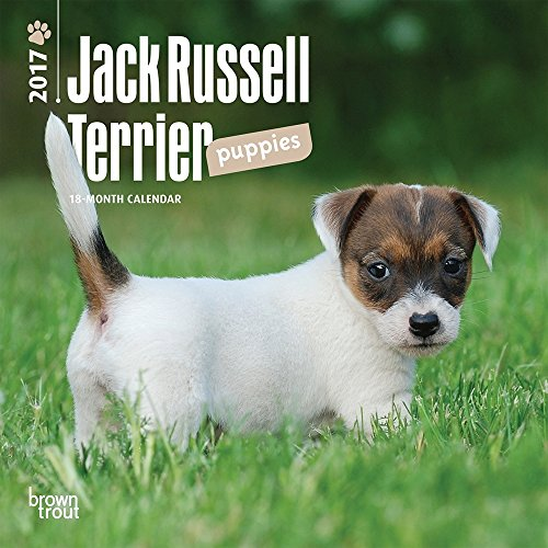 "Jack Russell Terrier Puppies 2017 Mini Calendar 7"" x 7"""