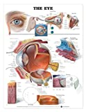 The Eye Anatomical Chart, Anatomical Chart Company Staff, 1587797070