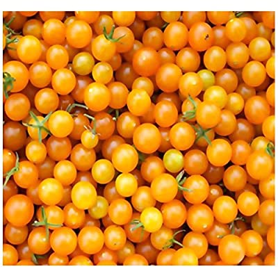 20 x Yellow Currant Spoon Tomato Seeds - Heirloom - World Smallest Tomatoes - Very Sweet & Tasty - by MySeeds.Co : Garden & Outdoor
