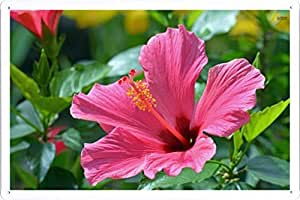 """Flower Tin Sign Hibiscus 35154 by Waller's Decor (7.8""""x11.8"""")"""