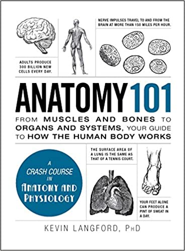 Anatomy 101 From Muscles And Bones To Organs And Systems Your
