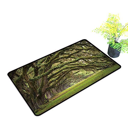 gmnalahome Extra Thick Door Mat Oaks Avenue Charleston SC Plantation Live Oak Trees Forest Landscape in ACE Basin Soak Up Water and Dirt W35 x H23 INCH (Patio Sc Outdoor Charleston Furniture)