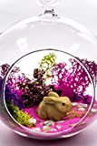 Terrarium Kit | Bunny Lovers W