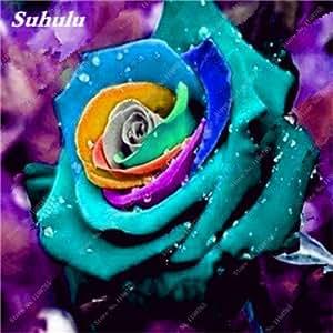 Nueva llegada coloridas de Rose 100 PC hermosas semillas raras Rose del arco iris de bricolaje Bonsai Pot Hogar y jardín Decoración flores tan fragantes 4