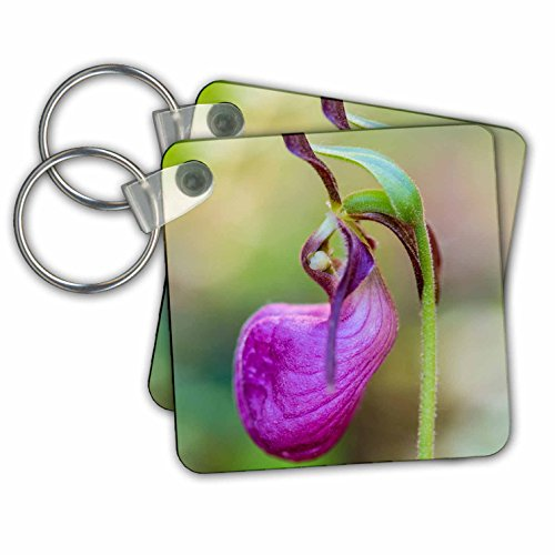 Danita Delimont - Flowers - Pink Ladys Slipper in a forest in Epping, New Hampshire. - Key Chains - set of 6 Key Chains (Slipper Hardware Set)