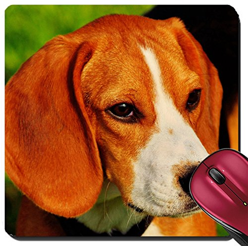 Price comparison product image Liili Suqare Mousepad 8x8 Inch Mouse Pads/Mat Beagle closeup head shot outside in a park IMAGE ID 19409355