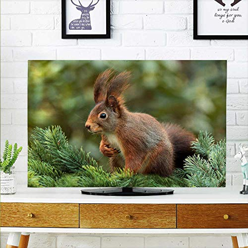 (aolankaili Cover for Wall Mount tv A Small Squirrel on a Pine Tree Cover Mount tv W36 x H60 INCH/TV 65
