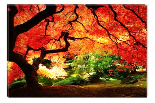 Startonight Wall Art Canvas Red Maple Nature, Trees USA Design