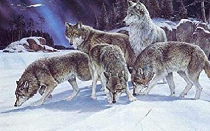 amazon com ron van gilder night trackers timber wolves posters
