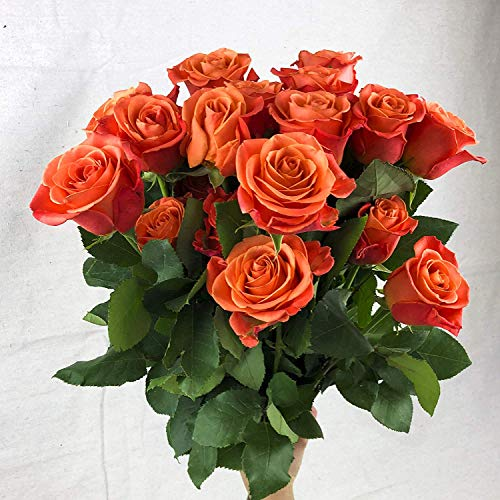 Green Choice Flowers - 24 (2 Dozen) Premium Orange Fresh Roses with 20 inch Long Stem Farm Fresh Flowers Beautiful Orange Rose Flower Cut Per Order Direct from Farm Free Fast Delivery Long Lasting (Orange Roses 12)