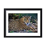 Framed 24x18 Print of Jaguar (Panthera onca), Central America Jaguar (Panthera onca) Linnaeus (13954245)