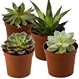 Seville Farms SUC001 Succulent (4 Pack), Mini, Green