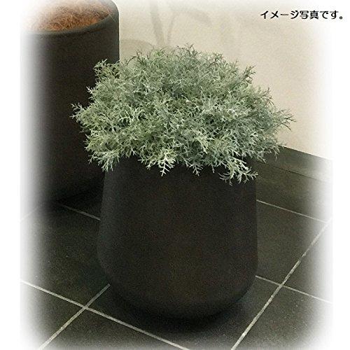 人工観葉植物 アーティフィシャルグリーンアレンジ 鉢付き 幅40cm rg-011 B074FWFT2K