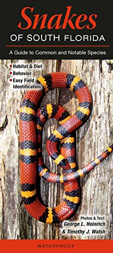 Snakes of South Florida: A Guide to Common - Snakes In Florida