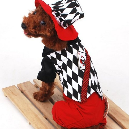halloween-magician-style-poker-pattern-strap-pet-dog-clothes