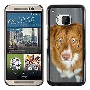TopCaseStore / la caja del caucho duro de la cubierta de protección de la piel - Nova Scotia Duck Tolling Retriever Dog - HTC One M9