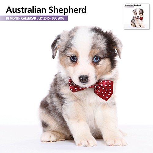 Australian Shepherd 18 Month 2016 Wall Calendar
