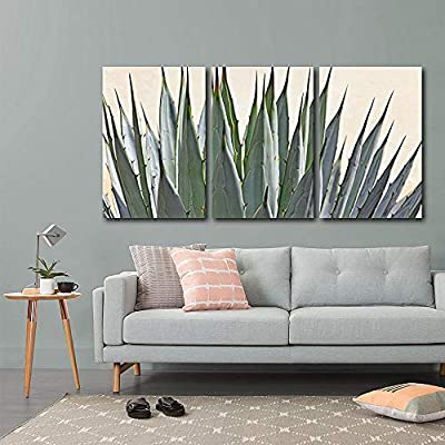 Detailed Cactus Succulent - 3 Panel Canvas Art
